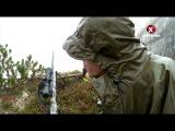 MeatEater / Охотник-собиратель Чернохвостый олень Ситка на юго востоке Аляски