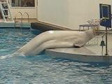 Дельфин шоу (Белый кит)
